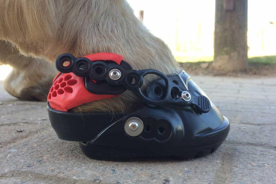 Evo Boot